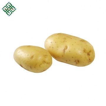 Frische organische Kartoffel für die Chips, die oder Pommes-Frites machen