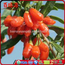 100% orgânico goji berries nutrição goji berry chá goji berries benefícios para a saúde