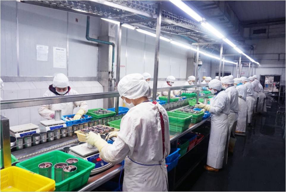 Canned Seafood Fish factory