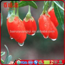 Where to buy goji berry plants dove acquistare le bacche di goji goji berry natural