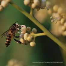 Organischer longan honig