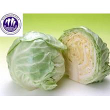 свежий зеленый цена китайской капусты