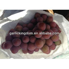 Melhor uva vermelha global / Uva Vermelha Yunnan / uva China
