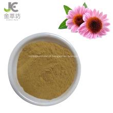 extrato de echinacea angustifolia 2% 4% chichoric em pó