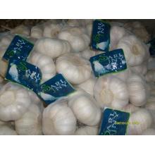 Exportação Nova Colheita Puro Branco Alho Chinês