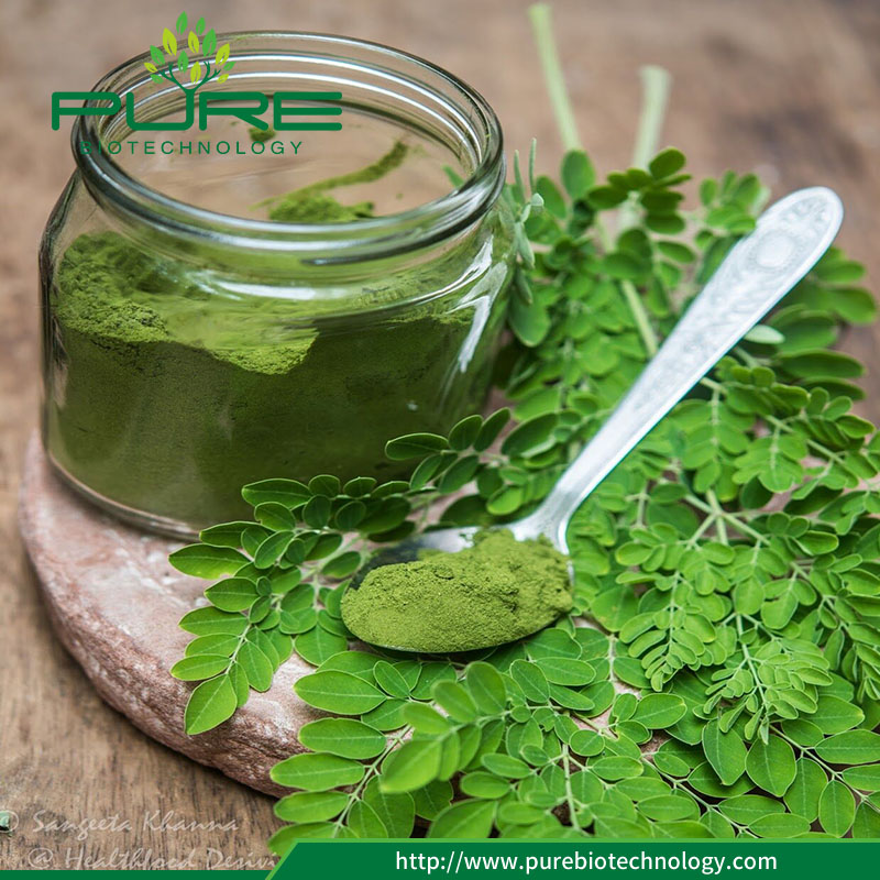 Wholesale Moringa Dried Leaves Health Benefits for Weight Loss 3