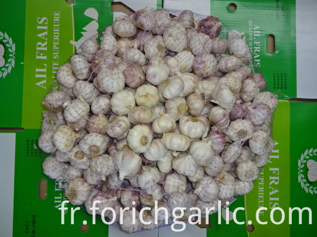 High Quality Fresh Garlic