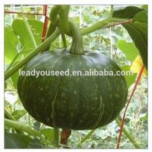 MPU07 Biqing dark green pumpkin seeds hybrid in chinese vegetable seeds