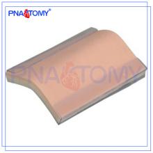 PNT-TM001 modelo de pele de silicone Suture Training Pad (com suporte) modelo