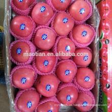 Shandong Fresh Red Fuji Apple-stripe