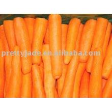 Zanahoria fresca china nueva