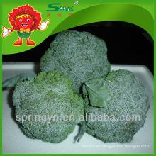 A granel de limpieza china fresca de brócoli