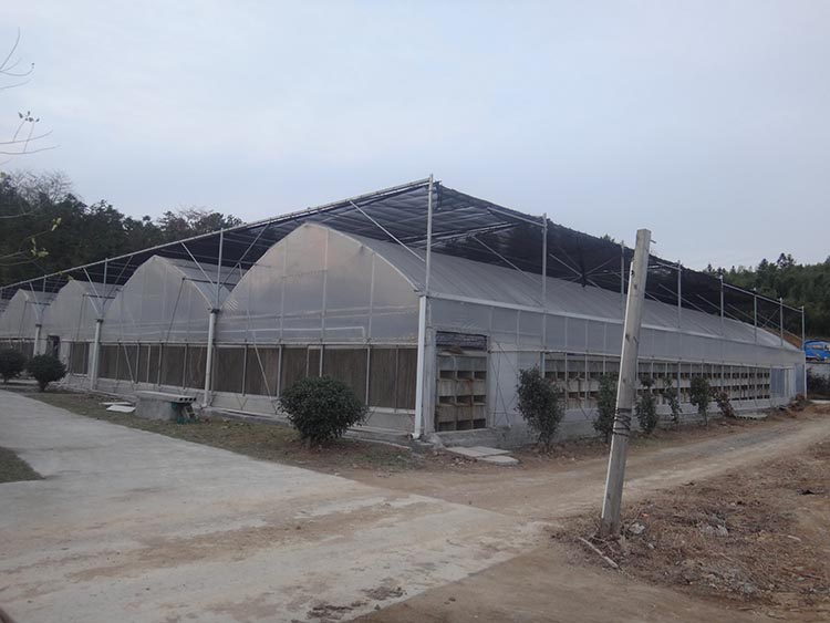 Multi Span Greenhouse 1