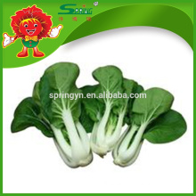 Pesticide free Chinese milk flowering cabbage