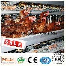 Layer Cage System für Huhn