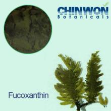 11. Brown Algen Extrakt Fettverbrenner Fucoxanthin 10% -50%