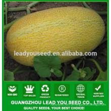 NSM08 Hale Preços de sementes de melão doce de boa qualidade, criador de sementes