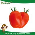 Suntoday детерминантный Рома фирма Fruit длинний срок годности при хранении Красный овал фрукты sygenta ГС-12 овощей F1 гибридных органические семена томатов(22001)