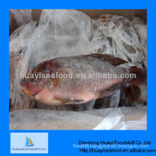 new fresh frozen fish frozen tilapia