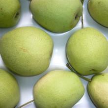 Suministro de nueva pera Shandong de cultivo