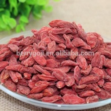 Sun Dried Goji berries in farm