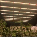 Hydroponic Light 320W LED-Röhren-Wachstumsstab