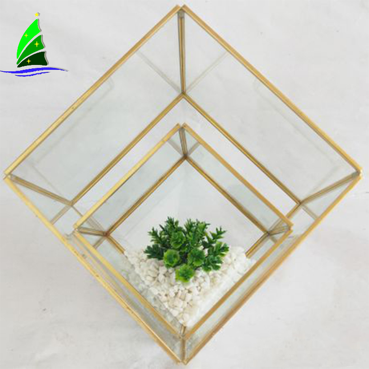 Glass Plant Terrariums