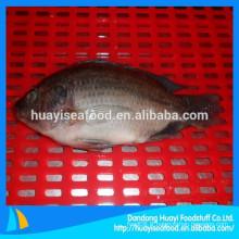 Tilapia congelé (Oreochromis Niloticus)