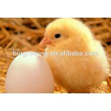 Sulfato de cobre para aves de corral aditivo para piensos, Feed Grade mejorar la inmunidad y reducir el estrés