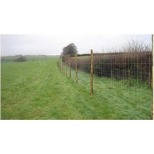 ISO9001 Certified Hot Sale High Quality Cheap Galvanized Field Fence, Cattle Fence, Farm Fence