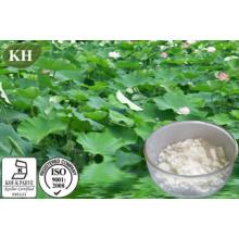 Nuciferine 2% & 10: 1 Lotus Leaf Extract
