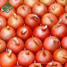 my test Yellow onion