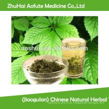 (Jiaogulan) Té Herbal Natural Chino Gynostemma