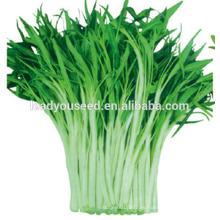 MWS02 Xiye tallo blanco semillas de espinaca de agua de alta calidad para plantar
