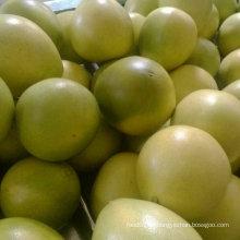 Pomelo fresco da colheita nova