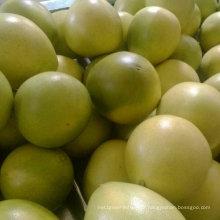 Nouveau Pomelo frais de récolte