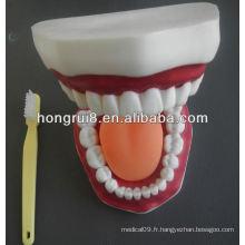 Modèle de soin dentaire médical de style nouveau, modèle dentaire pédagogique