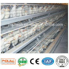 Pullet Farm Battery Cages Automatic Equipment