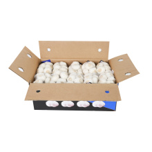 Super Quality Chinese Fresh Garlic to Europe Market