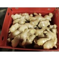 Hochwertige China Dry Fresh Ginger Full Air Dry