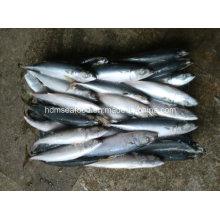 6-8 PCS / Kg замороженная рыба скумбрии