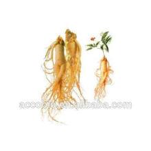 Suministro de aceite esencial de ginseng natural para cosméticos