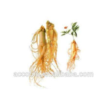Supply natural Ginseng essential oil for cosmetics