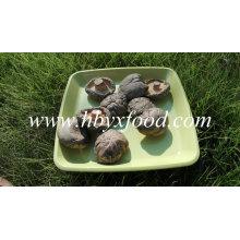 Champignon Shiitake aux légumes secs
