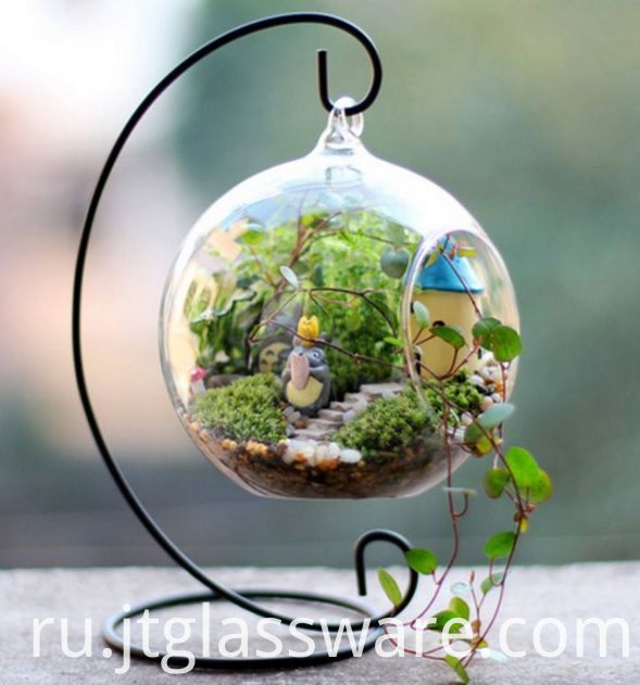 Green Plant Glass Terrarium 3