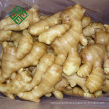 frischer Ingwerwurzelpreis fetter chinesischer fälliger Ingwer