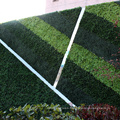 Customized fresh PE artificial plants green wall for privacy safety