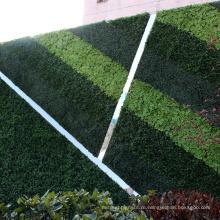 Подгонянный свежий ПЭ искусственные растения зеленая стена для конфиденциальности, безопасности