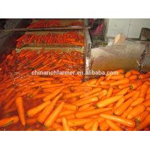 2016 Crop Chinês Cenoura