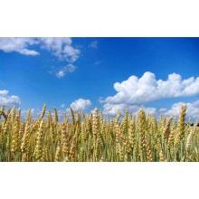 Selektives Herbizid-Pestizid von Rustler